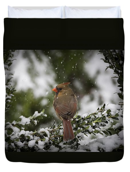 Cardinal In Snow Duvet Cover