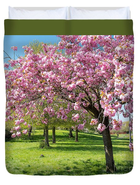 Cherry Blossom Tree Duvet Cover by Colin Rayner