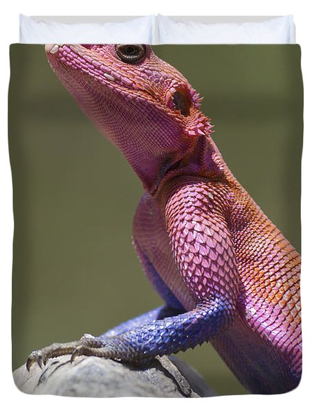 Colorful Rock Agama Duvet Cover