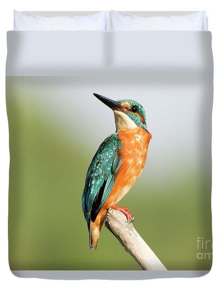 Common Kingfisher Alcedo Atthis Duvet Cover