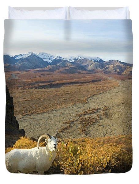 Dalls Sheep In Denali Duvet Cover