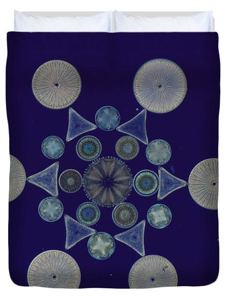 Diatom Arrangement Duvet Cover by M. I. Walker