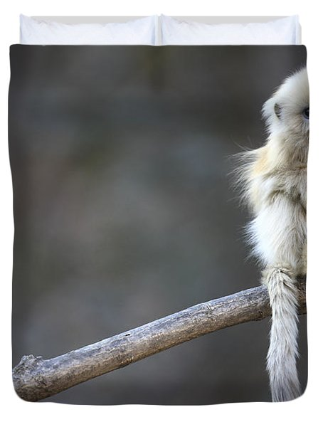 Golden Snub-nosed Monkey Rhinopithecus Duvet Cover by Cyril Ruoso