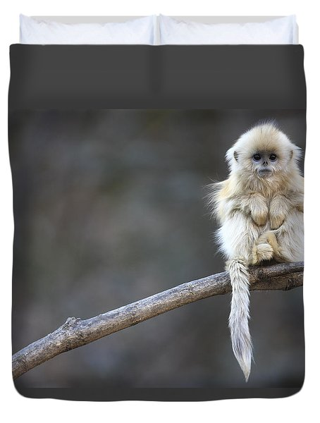 Duvet Cover featuring the photograph Golden Snub-nosed Monkey Rhinopithecus by Cyril Ruoso