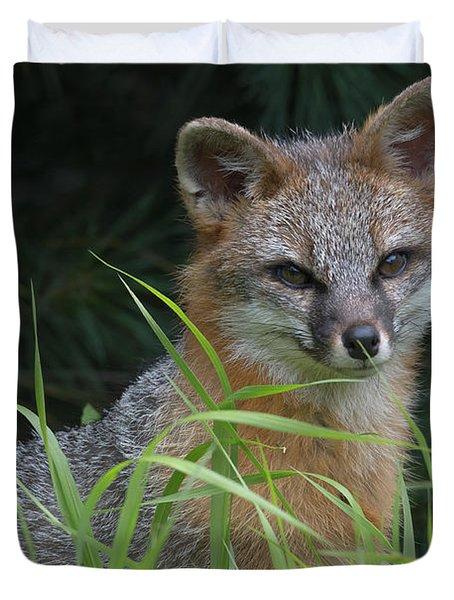 Gray Fox In The Grass Duvet Cover