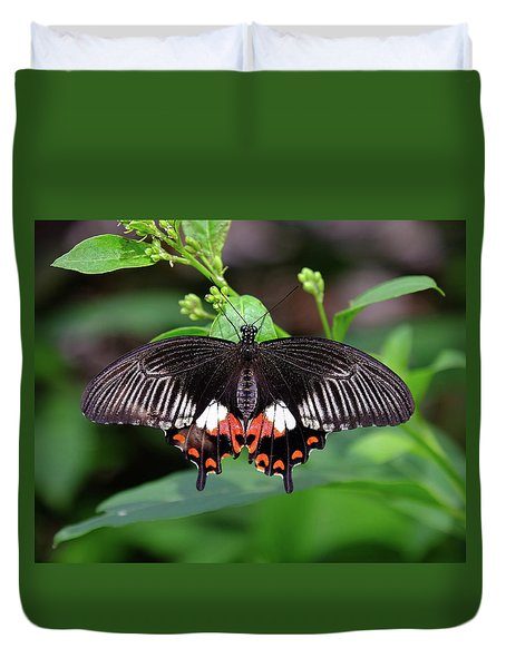 Great Mormon Butterfly Duvet Cover by Ronda Ryan