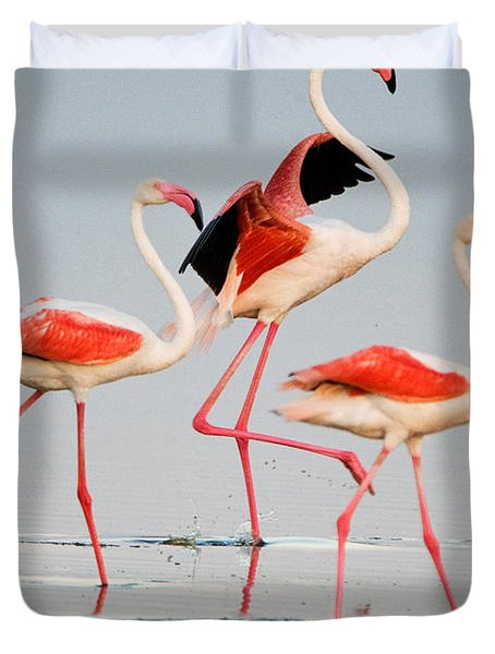 Greater Flamingos Phoenicopterus Roseus Duvet Cover by Panoramic Images