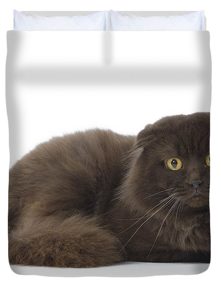 Highland Fold Cat Duvet Cover