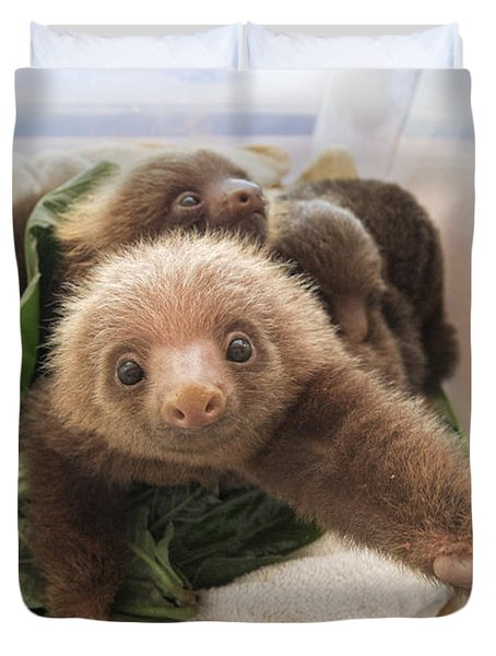 Duvet Cover featuring the photograph Hoffmanns Two-toed Sloth Choloepus by Suzi Eszterhas