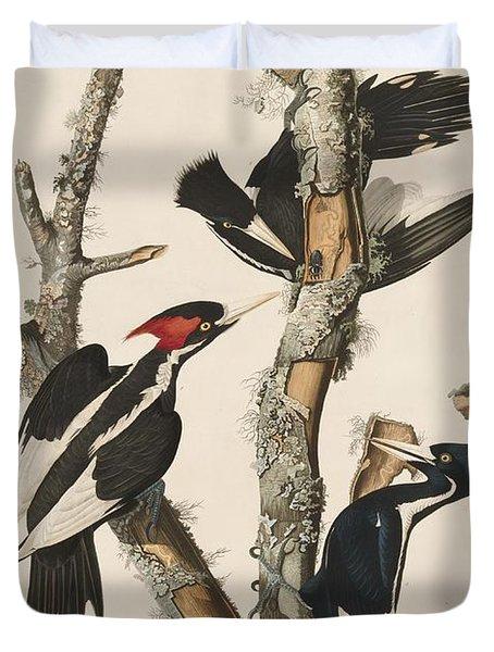 Ivory-billed Woodpecker Duvet Cover