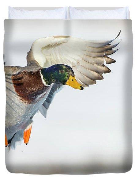 Mallard In Flight Duvet Cover