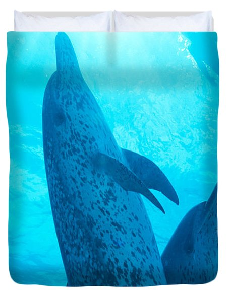 Pair Of Spotted Dolphins Duvet Cover by Ed Robinson - Printscapes