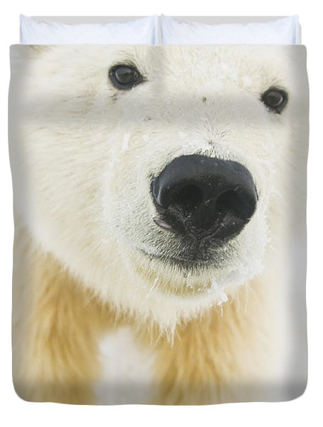 Polar Bear  Ursus Maritimus , Curious Duvet Cover