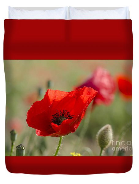 Poppies In Field In Spring Duvet Cover