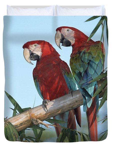 Red And Green Macaw Ara Chloroptera Duvet Cover by Konrad Wothe
