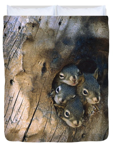 Red Squirrel Tamiasciurus Hudsonicus Duvet Cover by Michael Quinton