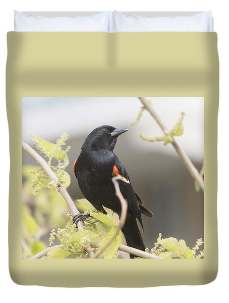 Red Wing Blackbird Duvet Cover