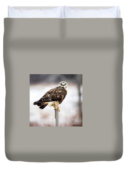 Rough-legged Hawk Duvet Cover by Ricky L Jones
