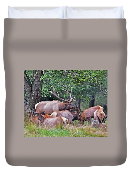 Duvet Cover featuring the photograph  Royal Roosevelt Bull Elk by Jack Moskovita