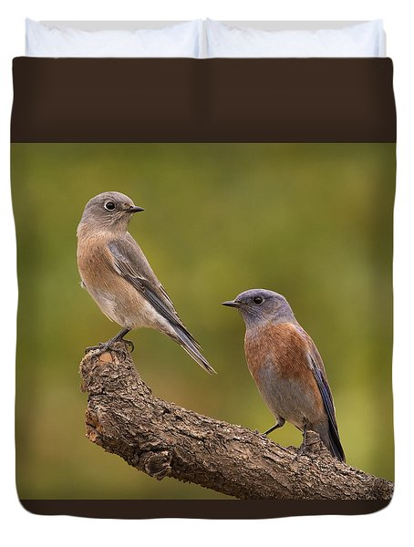 Western Bluebird Duvet Cover by Doug Herr