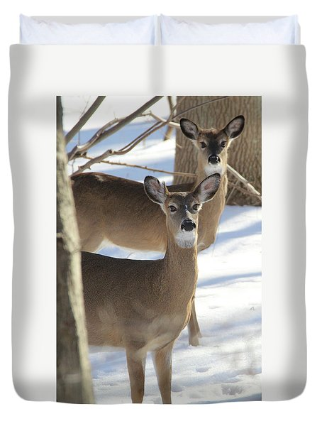 White Tailed Deer Smithtown New York Duvet Cover