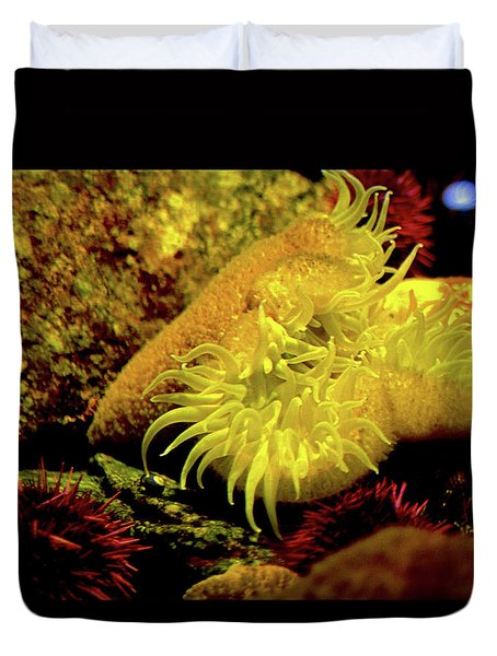 Sea Urchins Duvet Cover