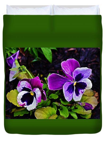 2015 Spring At Olbrich Gardens Violet Pansies Duvet Cover