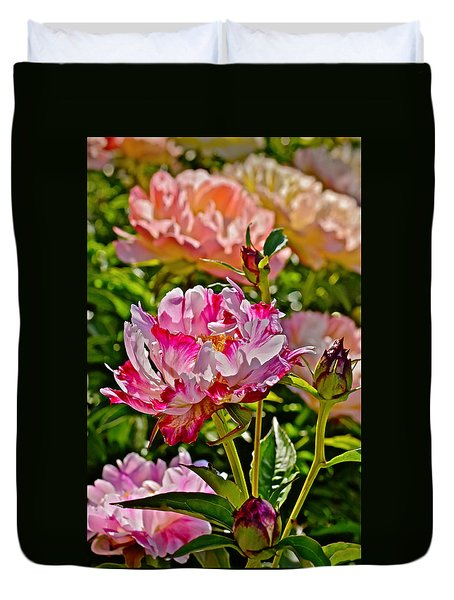 2015 Summer's Eve At The Garden Candy Stripe Peony Duvet Cover