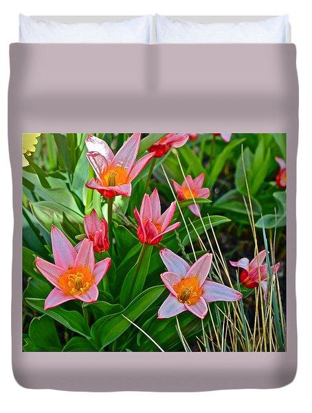 2016 Acewood Tulips 2 Duvet Cover