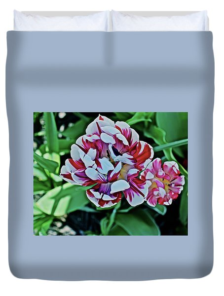 Duvet Cover featuring the photograph 2018 Acewood Tulips Red And White 1 by Janis Nussbaum Senungetuk