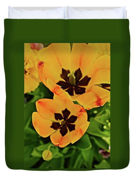 Duvet Cover featuring the photograph 2018 Acewood Tulips Yellow Blooms by Janis Nussbaum Senungetuk