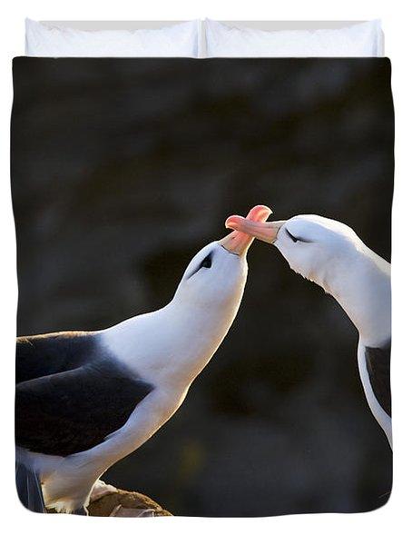 Black-browed Albatross Couple Duvet Cover by Jean-Louis Klein & Marie-Luce Hubert