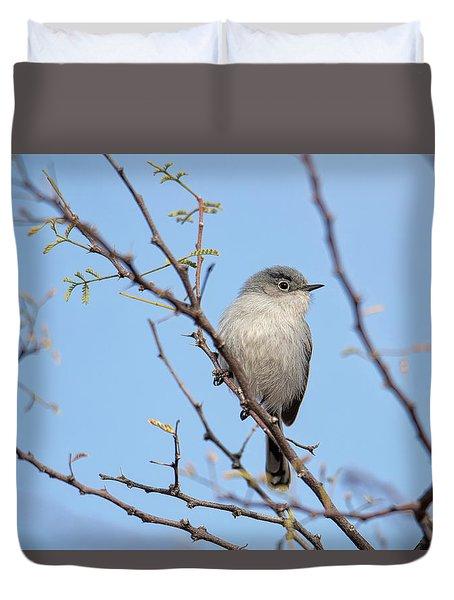 Black-tailed Gnatcatcher Duvet Cover
