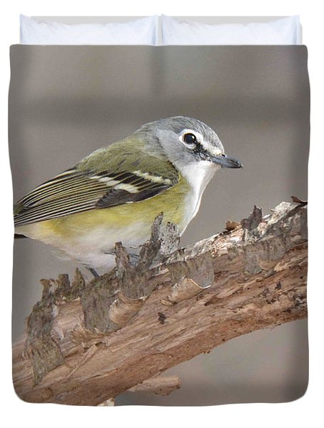 Blue-headed Vireo Duvet Cover
