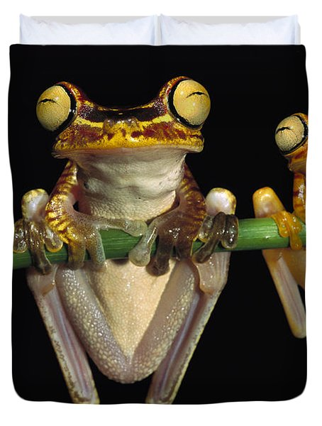 Chachi Tree Frog Hyla Picturata Pair Duvet Cover