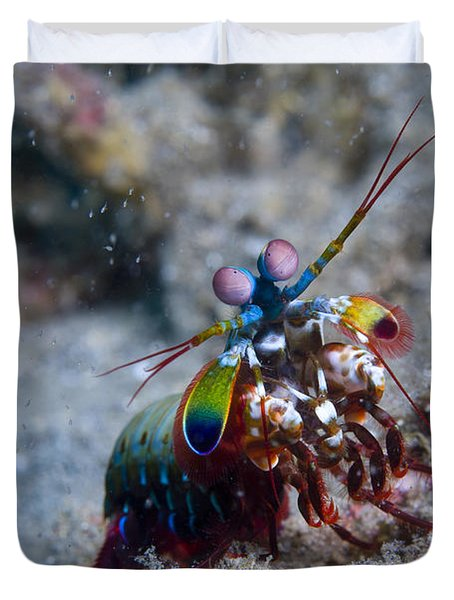 Close-up View Of A Mantis Shrimp, Papua Duvet Cover