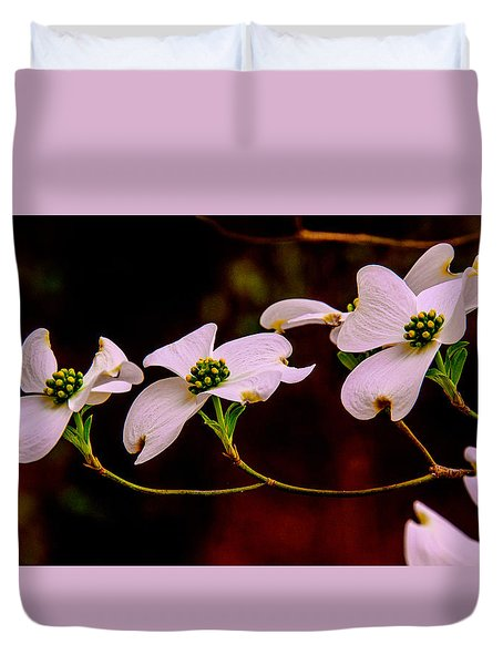 3 Dogwood Blooms On A Branch Duvet Cover by John Harding