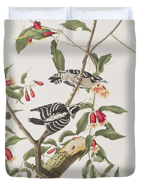 Downy Woodpecker Duvet Cover by John James Audubon