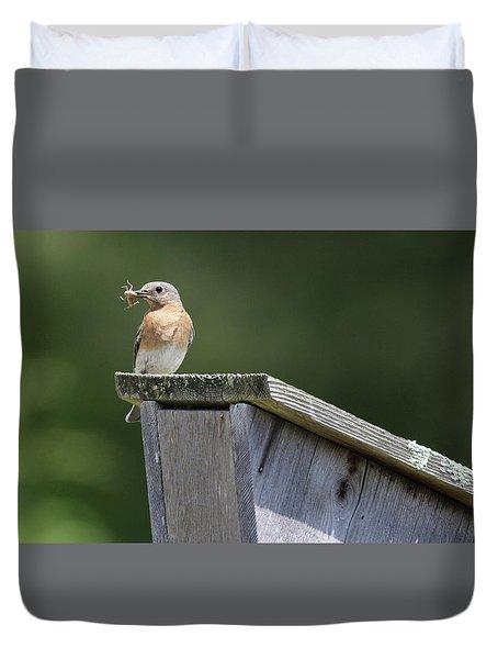 Eastern Bluebird Calverton New York Duvet Cover
