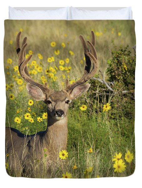 Eight Point Buck In The Grass Lands Of The Great Sand Dunes Duvet Cover