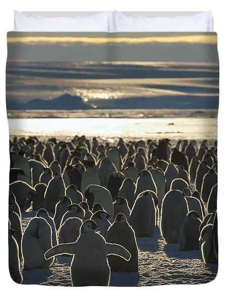 Emperor Penguin Aptenodytes Forsteri Duvet Cover by Pete Oxford