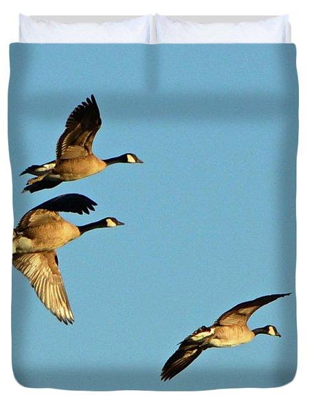 3 Geese In Flight Duvet Cover