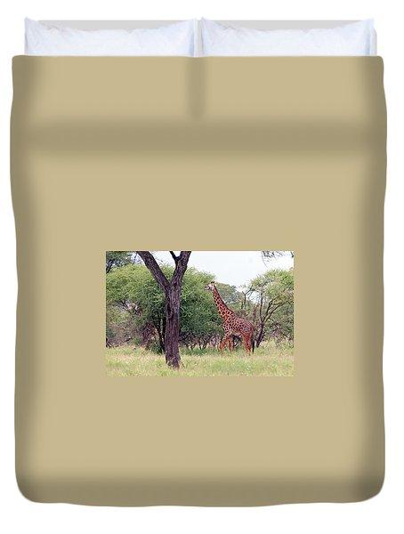 Giraffes Eating Acacia Trees Duvet Cover