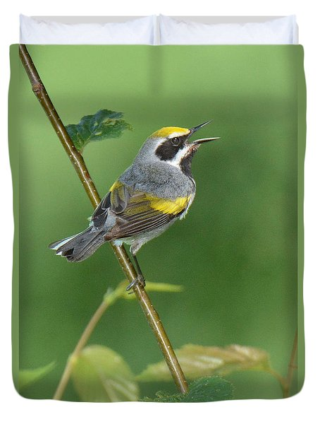 Golden-winged Warbler Duvet Cover