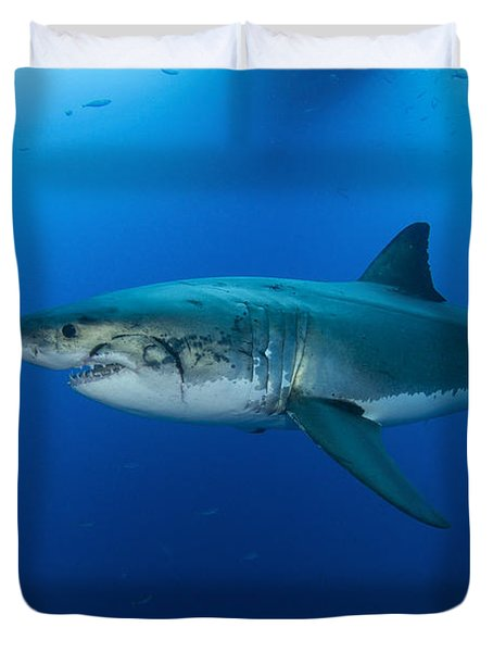 Male Great White Shark, Guadalupe Duvet Cover by Todd Winner