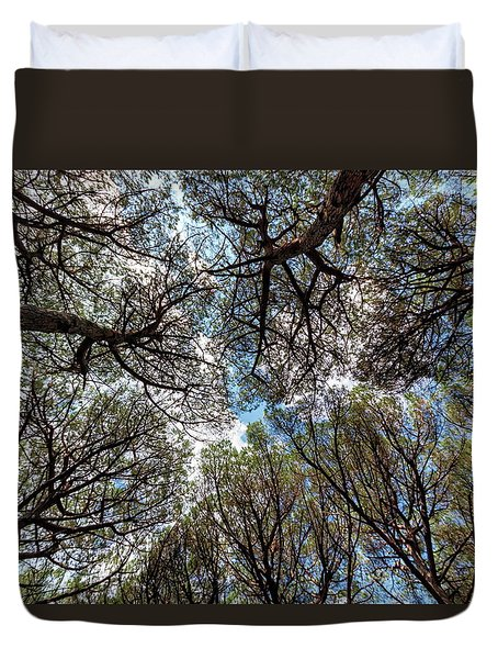 Pinewood Forest, Cecina, Tuscany, Italy Duvet Cover