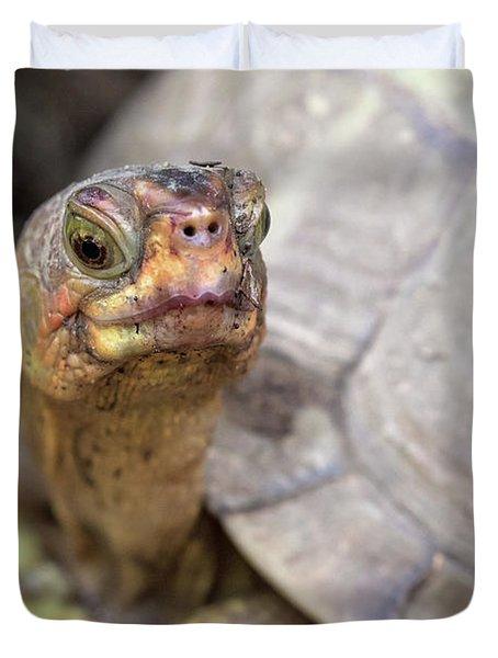 Turtle Town Duvet Cover