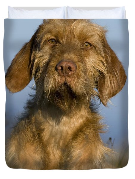 Wirehaired Vizsla Duvet Cover