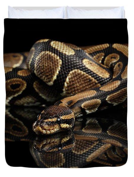 Ball Or Royal Python Snake On Isolated Black Background Duvet Cover