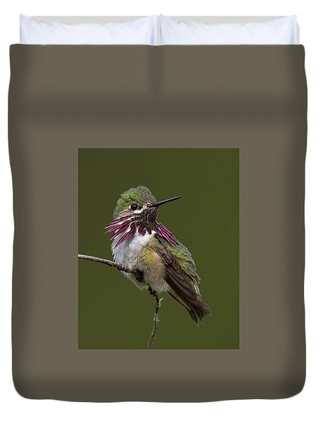 Calliope Hummingbird Duvet Cover by Doug Herr